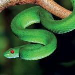 Giải mã giấc mơ thấy rắn & nằm ngủ mơ thấy rắn độc